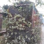 देहरादून में ट्रक से उगा पेड