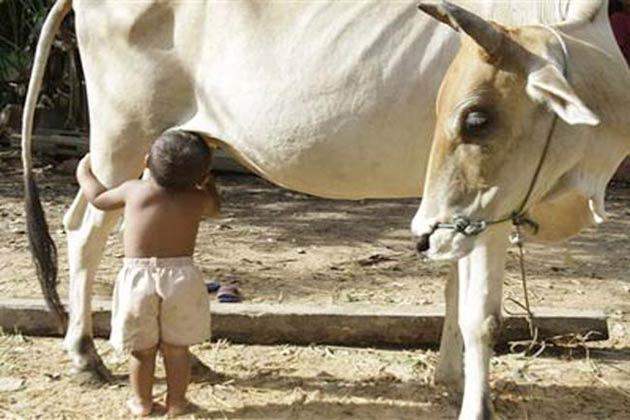 अजब गजब गाय