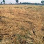 किसान की आत्महत्या, नही सुन पाया मोदी के 'मन की बात'
