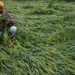 लगातार हुई बारिश से फसलो को भारी नुकसान, दो किसानो की सदमे से मौत