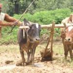 उत्तराखंड के किसानो की मिली राहत, ब्याज व बिजली सरचार्ज माफ़ करने के निर्देश