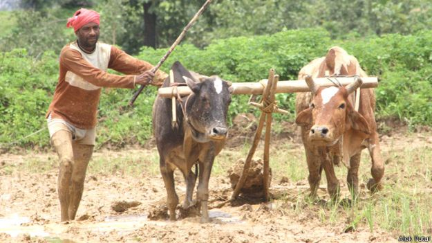 उत्तराखंड किसान