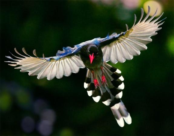 पक्षी १