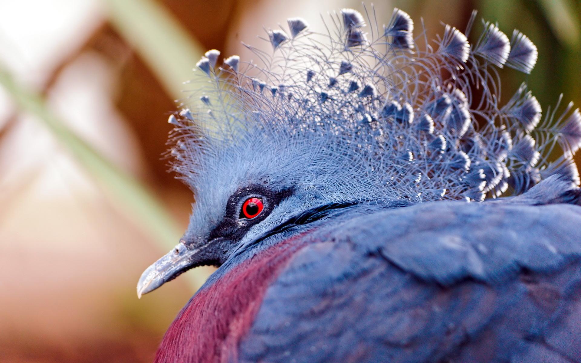 पक्षी ८