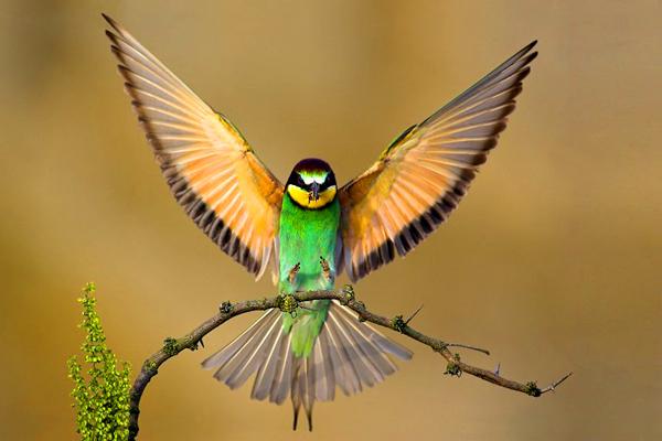पक्षी 2