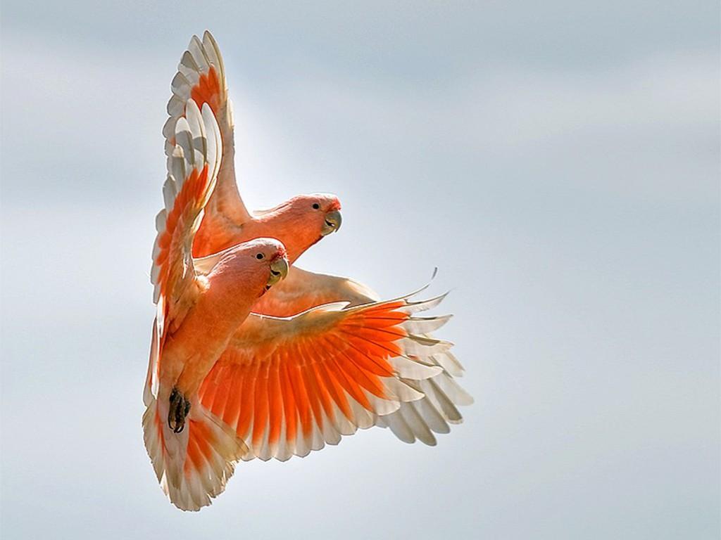 पक्षी 3