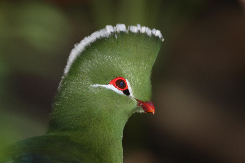 पक्षी 5