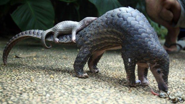 amazing animal 10