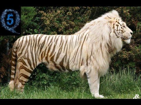 amazing animal 3