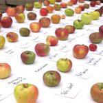 """दिल्ली में """"उत्तराखण्ड सेब महोत्सव"""" का शुभारम्भ"""
