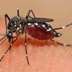 डेंगू के मामलों में आई कमी