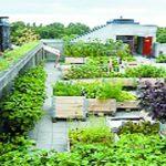 अजब गजब : छत पर उगाएं सब्जी 2 लाख तक हो सकती है इनकम