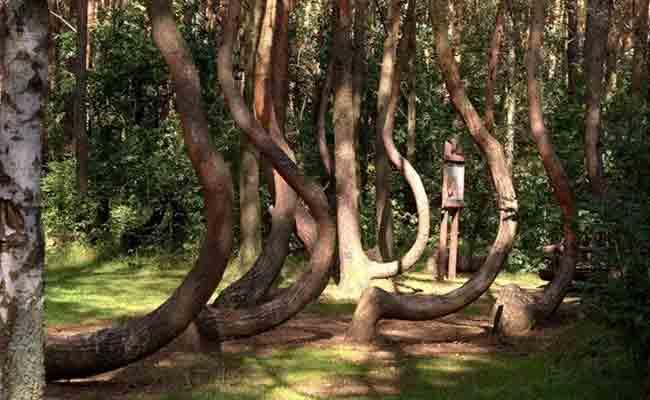 3tree