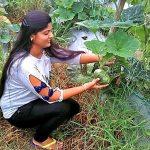 जॉब छोड़ सब्जी की खेती कर रही यह लड़की, जानिए खबर