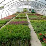 बागवानी किसानों की आमदनी का हो सकता है प्रमुख जरिया, जानिए खबर