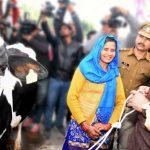 सीएम ने महिला पशुपालको को भेट की गाय