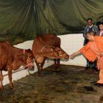उत्तराखंड : सीएम योगी ने पूजा-अर्चना की तथा गौशाला में गायों को खिलाया गुड़