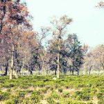 दो हजार चाय बागान श्रमिक बेरोजगारी की कगार पर