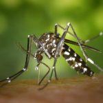 एक कीड़ा जो एक  दिन 1,470 लोगों को मार देता है