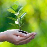 विश्व पर्यावरण दिवस कल जानिए इतिहास