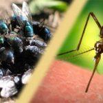 जानिए मक्खियों और मच्छरों से छुटकारा पाना का तरीका