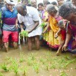 जब धान की रोपाई करने खेत में उतरे मुख्यमंत्री ,जानिए खबर