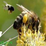 फूलों की खेती, मशरूम उत्पादन, मधुमक्खी पालन को स्वरोजगार से जोड़े, जानिए खबर