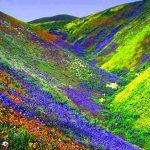 फूलों की घाटी पर्यटकों के लिए हुई बंद, जानिए खबर