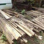 वन विभाग के गोदामों में सड़ रही है करोड़ों रुपये की बेशकीमती लकड़ी