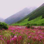 एक जून से फूलों की घाटी का दीदार, जानिए खबर