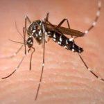 डीएम ने डेंगू के निस्तारण के कार्यों की प्रगति की समीक्षा की