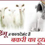 डेंगू का डंक :  बकरी के दूध की डिमांड बढ़ी