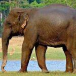 हाथी ने मचाया जमकर उत्पात, जानिए खबर