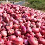 खेत खोद हज़ारों रुपयों के प्याज़ चुरा ले गये चोर, जानिए खबर