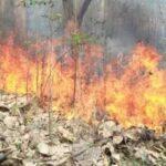 दुःखद : जंगल की आग में जिंदा जली दो महिलाएं