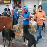 सराहनीय कार्य : पशु प्रेमी खिला रहे आवारा पशुओं को पशु आहार