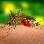 डेंगू-मलेरिया : 100 घरों में पाया गया मच्छर का लार्वा