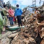 जरा हटके : 300 वर्ष पुरानी वोगनबेलिया की बेल पेड़ सहित टूटी