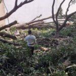 हरे वृक्षों का धड़ल्ले से हो रहा कटान, जानिए खबर