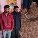 पुलिस ने पकड़ा ढाई करोड़ कीमत वाला दोमुंहा सांप, तीन लोग गिरफ्तार